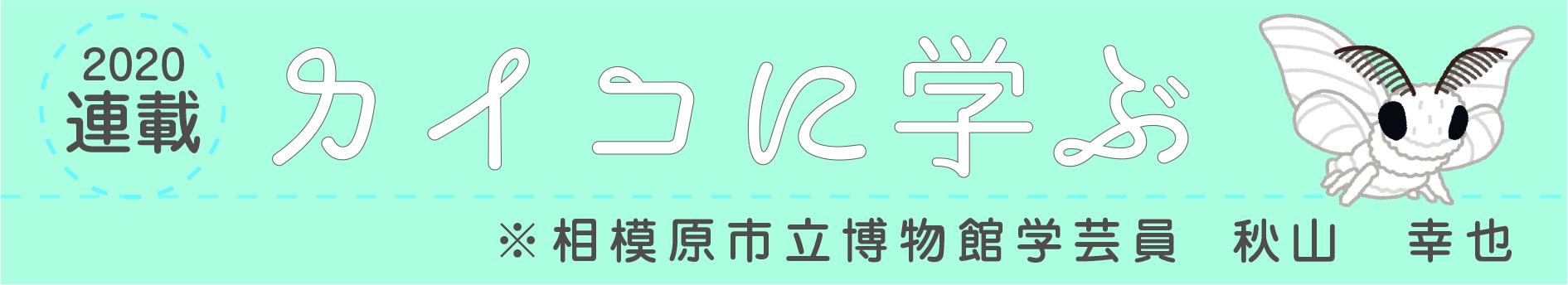 2020掲載 カイコに学ぶ ※相模原市立博物館学芸員 秋山幸也